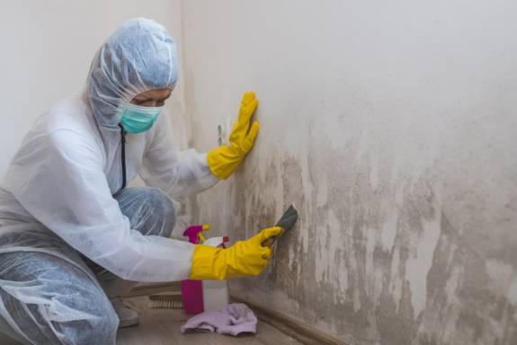 Female worker of cleaning service removes mold from wall using spray bottle with mold remediation chemicals and scraper tool.
